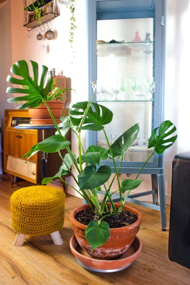 Blumenkasten Boxes Pflanzgefasse Plant Tolle Topfe Pflanzen