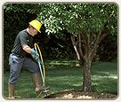 If your trees are looking weak and slowly dying, then you need an essential mineral elements to protect your trees. It is important that you directly inject fertilizer into the root zone for maximum benefit of your tree. If you want to ensure healthy and robust trees, then you need deep root tree fertilization programs for your property to keep it looking beautiful year to year.
