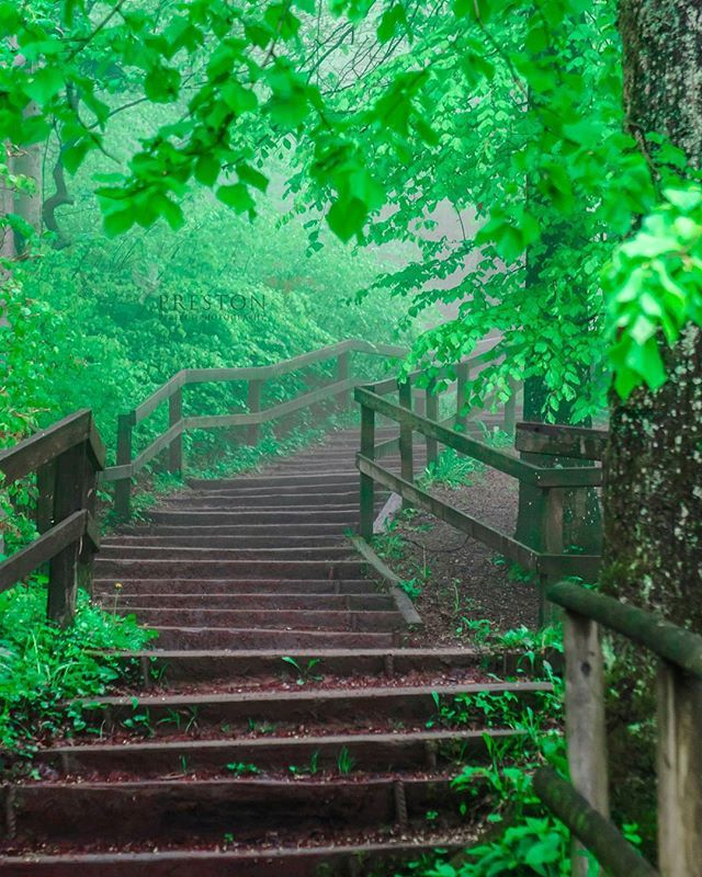 Let's make the world greener..... #naturephotography #green #spring #leaves #stairs