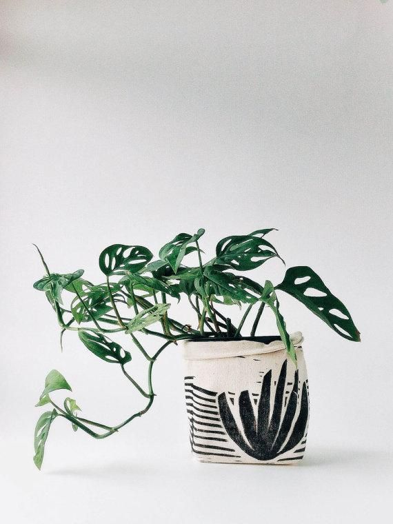 A potting upgrade for your favorite plant.