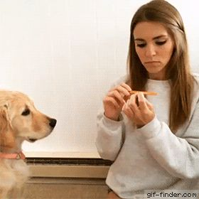 Honey's becoming a little diva | Gif Finder – Find and Share funny animated gifs