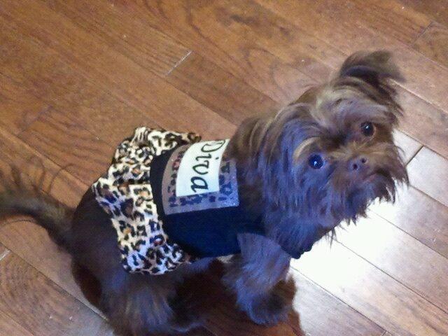 Lanoka Harbor Dog Adoption