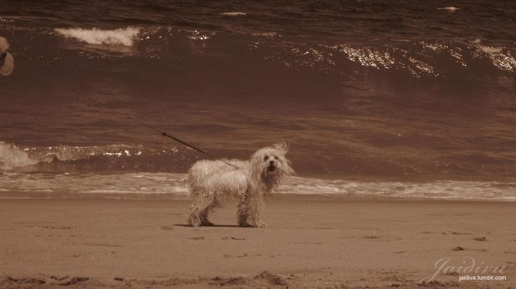 Perrito en la playa.