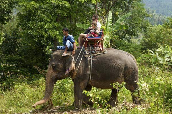 Elephant trekking in Ko Samui, Thailand