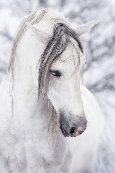 white horse....mane over eyes...