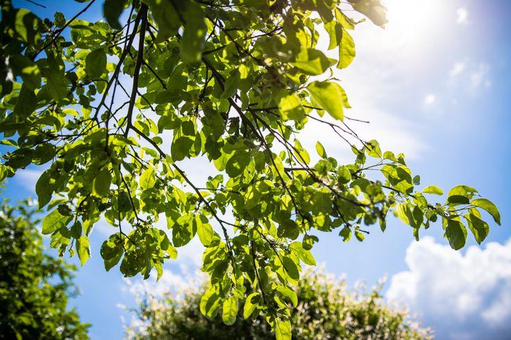 słońce zza liści