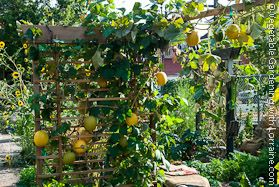 556687203915203550 on small vegetable garden design pictures