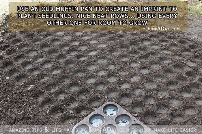 Use a muffin pan to create perfect rows and spacing for planting seeds