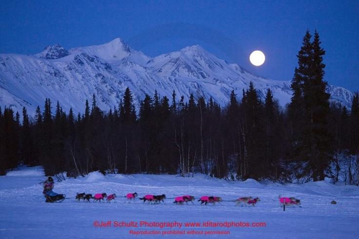 Iditarod!  Beautiful shot.