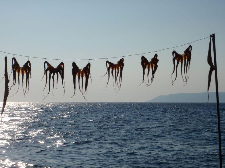 Octopus for...........October  #Villa #Molova  #Molyvos, #Μήθυμνα, #Lesvos, #Greece