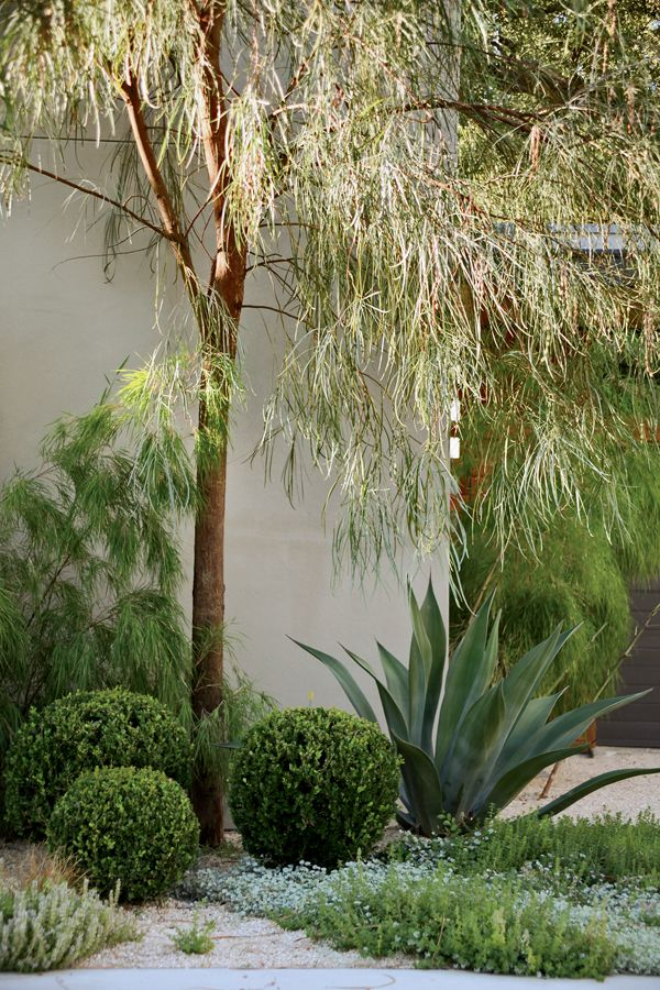 Love the textures in these plantings with the Acacia stenophylla. From Stephen Orr's new book via Flora Grubb