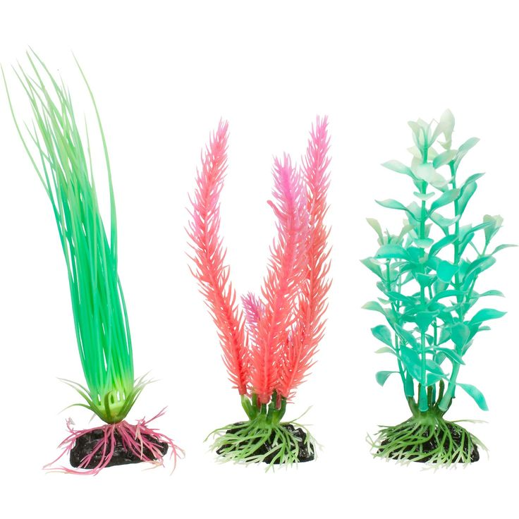 31 best glo fish images on pinterest fish aquariums for Petco tropical fish