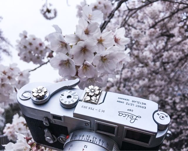 I looove Sakura so much(^O^☆♪http://www.shopjay.com/products/detail.php?product_id=447#leica #leicacraft #sakura #kamera