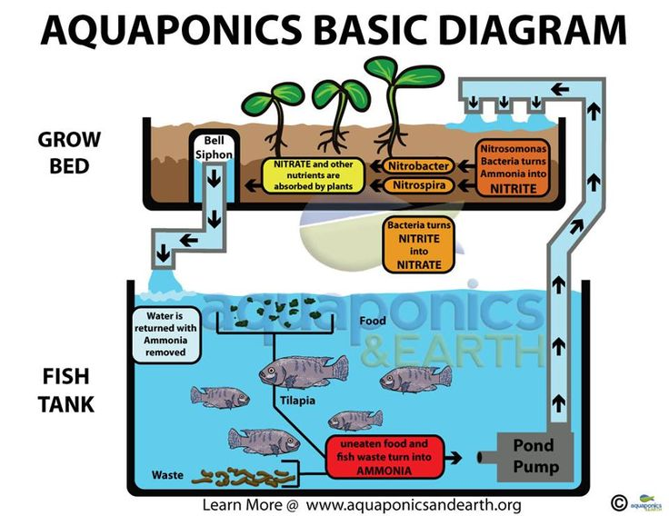 Basic Aquaponics set-up