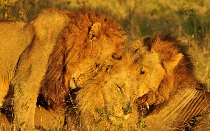 On first hearing about the Big Five – lion, leopard, rhinoceros, buffalo and elephant – you may presume that the select few were…