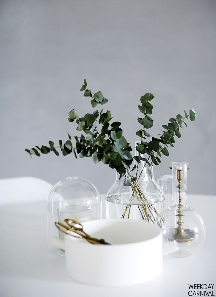 Green leaves in glass vases