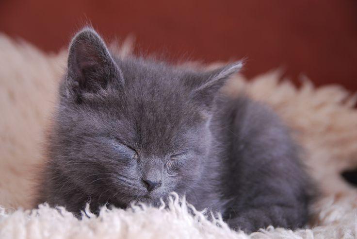 My kitten, Pip