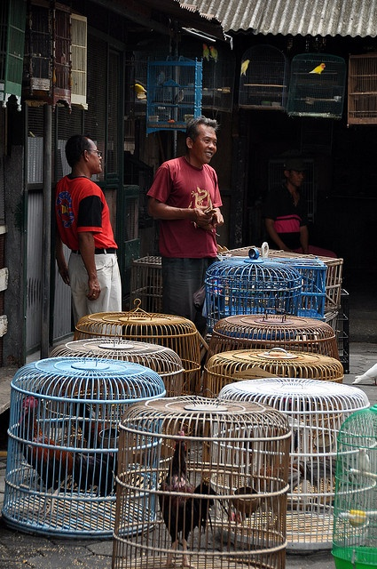 Pasar Ngasem Bird Market in Yogyakarta, Indonesia  ...great photo, it's sad to see so many birds in tiny cages, but it's such a part of Jogya...