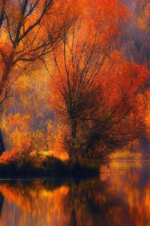 ♥ ✿ڿڰۣ ♥ #NYRockPhotoGirl ♥༻stunning view Ѽ♥...#autumn #fall #crimson #sky #delight #november.
