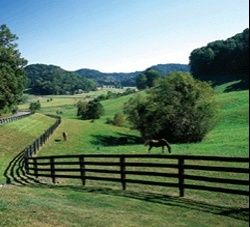 Heart of horse country - Leipers Fork and Franklin (Williamson County), TN - If I could live anywhere it would be here