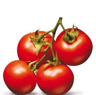 Tomat Såtid: Feb, Mar, Apr, Mai Blomstringstid: Juli, Aug, Sept