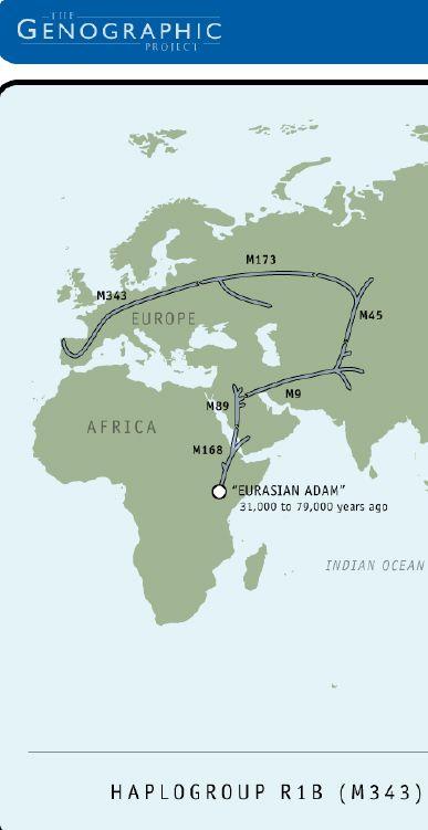 Haplogroup R1B M343