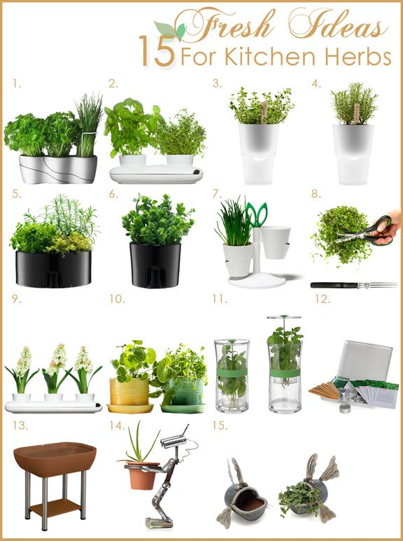 Plants In Kitchen | Fresh Herb Garden In The Kitchen | Kitchen Designs Blog  Of Kitchen