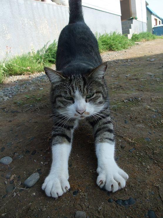 朝ヨガのススメ PART1 猫と牛のポーズ   広島 ヨガ プリンスホテル広島の温泉付きヨガ教室 お役立ちヨガ情報
