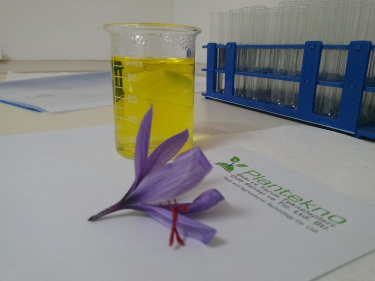 In our lab. Experiment to show saffron water dye ability. http://plantekno.com