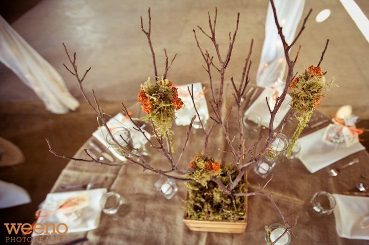 Great centerpiece idea mesquite branch and moss