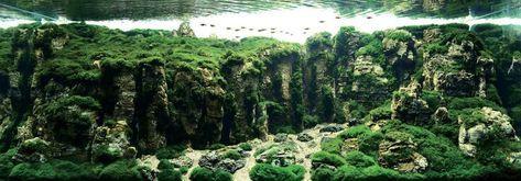 Aquarium Einrichtungsbeispiele Moos Steine