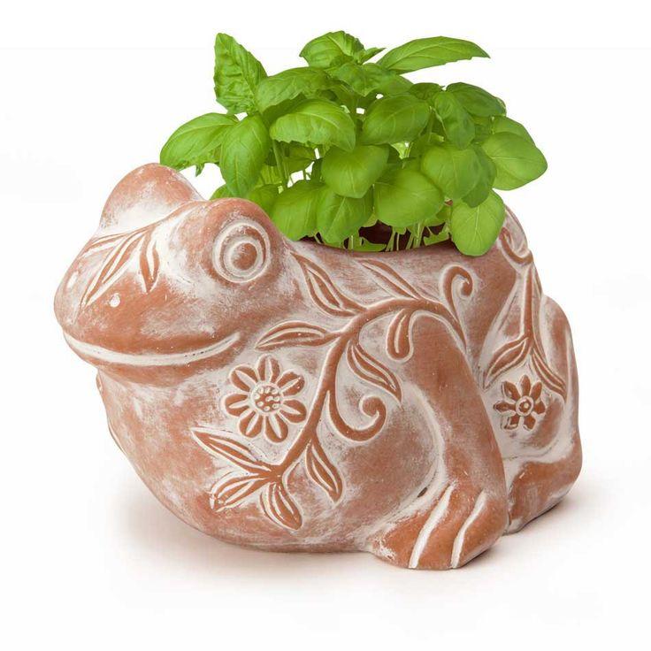 Terracotta Frog Herb Planter