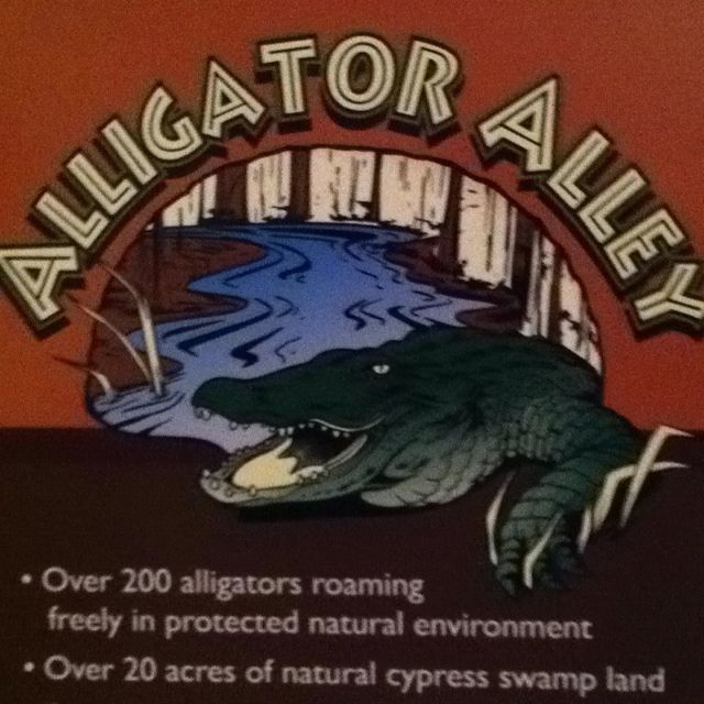 Alligator Alley - Gulf Shores, AL @norasmomma We might have to do this again this year. I think the little boys would love it!