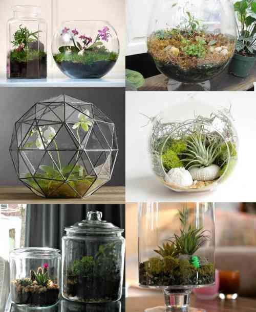 six idées de terrarium décoratif