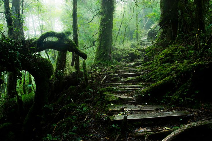 14 | Taiping Mountain Path in Taiwan | www.eklectica.in #eklectica