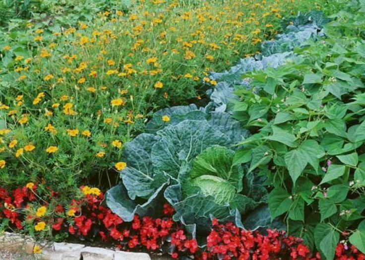 1000 id es sur le th me fleur mandala sur pinterest - Association plantes aromatiques entre elles ...