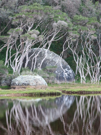Tidal River, Wilsons Promontory National Park, Victoria Australia