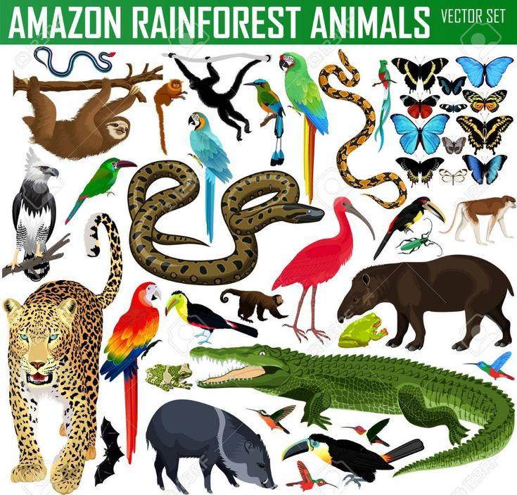Stock Photo In 2020 Amazon Rainforest Animals Amazon Animals