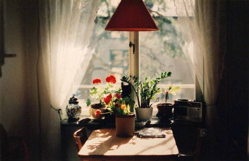 what home should look likeLights, Apartments Home Gardens, Tables Sets, Kitchens Tables, Windows, Sunny Day, Good Book, Mornings, Flower