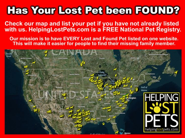 Helping Lost Pets, Find cats dogs found pets missing
