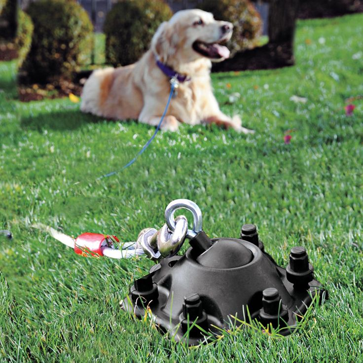 SUREswivel - 360 Degree Swiveling, Tangle-Free Pet Tie-Out... Now I don't like dogs to be chained up 24/7, but for the occasional time outside, this is a great idea! Two thumbs up!