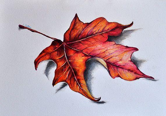Original color dibujo a lápiz, hoja de arce rojo, pulgadas de 5.5x8 dibujo botánico