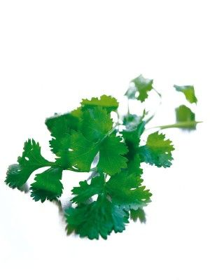 Coriander for your kitchen