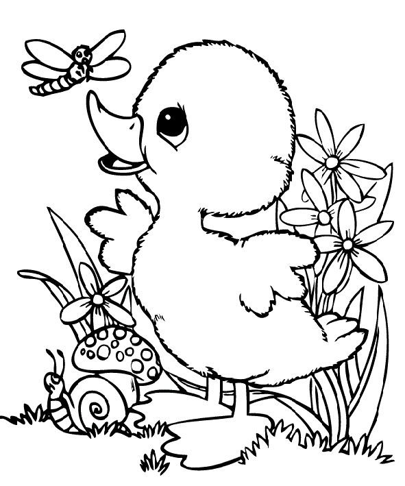 Baby Duck And Dragonfly Coloring Pages Animal Coloring Pages Coloring Pages Cartoon Coloring Pages