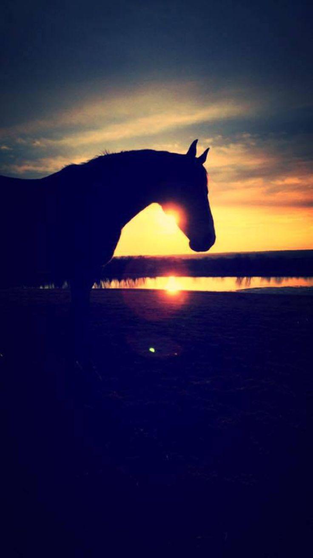 Beautiful Wallpaper Horse Sunrise - 4f5ac8481b8a5cf2a0b00d8da87e8e93--sunset-pics-breathe-in  Pic_834065.jpg