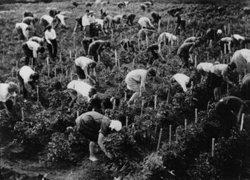 Farmers on a Kolkhoz (collective farm) during Comrade Stalin's collectivisation campaign which ended the capitalist elements brought to the Soviet Union by the New Economic Policy