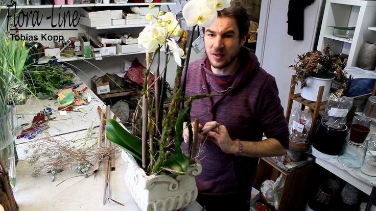 Blumendeko selber machen: Orchideepflanze harmonisch & naturnah ausgarni...