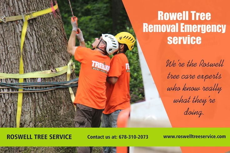 Trees are very important for the environment. The Tree Cutting Service near me p…