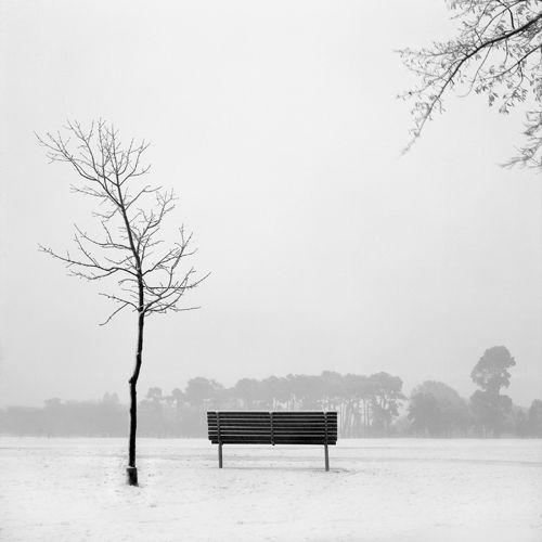 Hagley Park in winter by my friend Darryl Gilbert