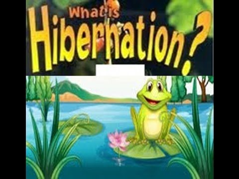 Hibernation Definition for Kids - Toddlers,Kindergarten,Preschoolers - YouTube